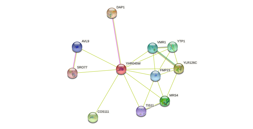 YHR045W protein (Saccharomyces cerevisiae) - STRING interaction network