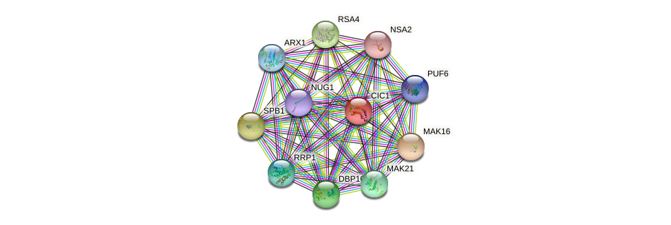 CIC1 protein (Saccharomyces cerevisiae) - STRING interaction network