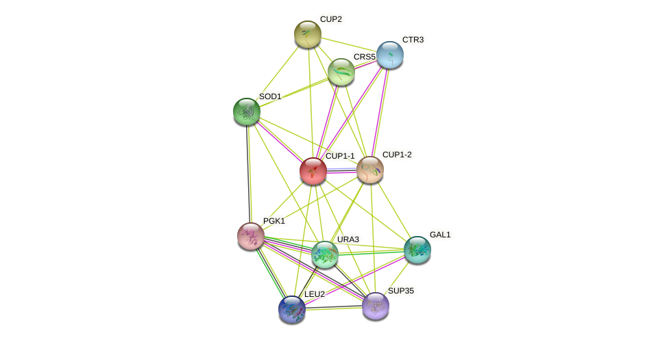 CUP1-1 protein (Saccharomyces cerevisiae) - STRING interaction network