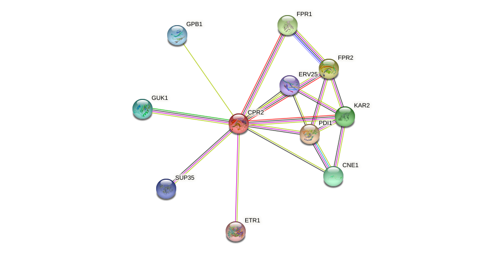 CPR2 protein (Saccharomyces cerevisiae) - STRING interaction network