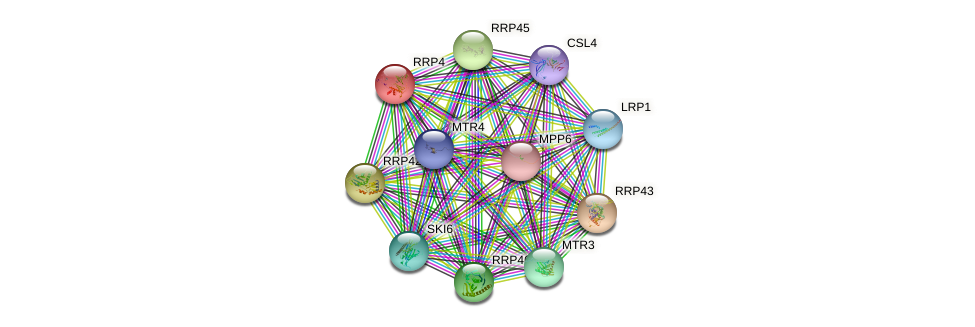 RRP4 protein (Saccharomyces cerevisiae) - STRING interaction network