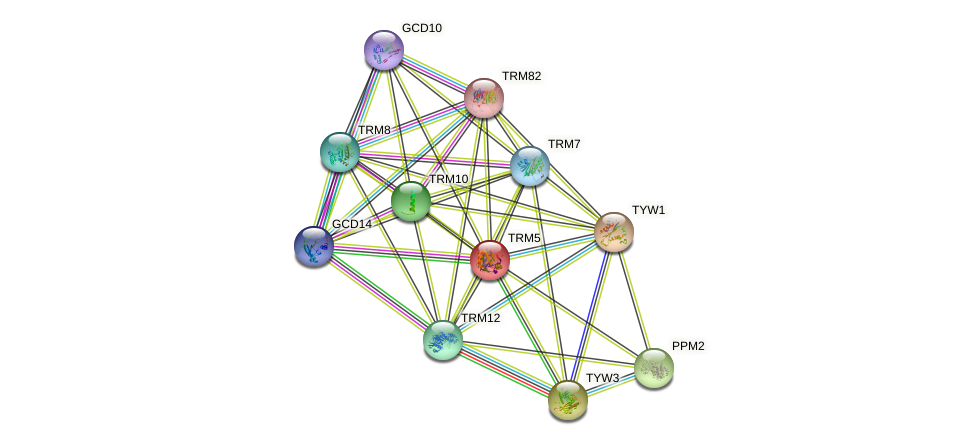 TRM5 protein (Saccharomyces cerevisiae) - STRING interaction network