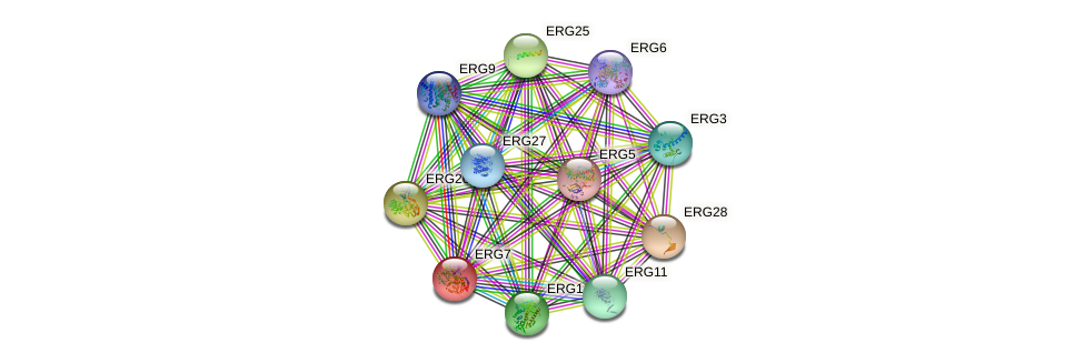 ERG7 protein (Saccharomyces cerevisiae) - STRING interaction network
