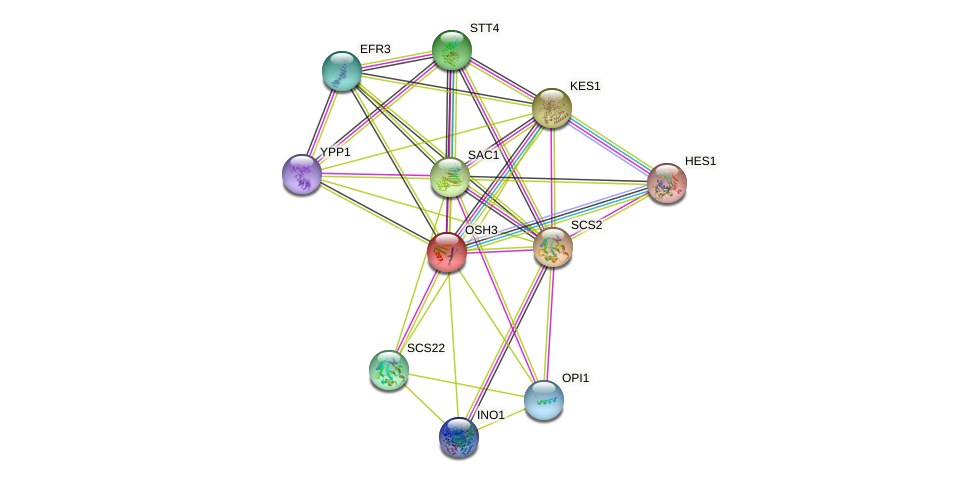 OSH3 protein (Saccharomyces cerevisiae) - STRING interaction network