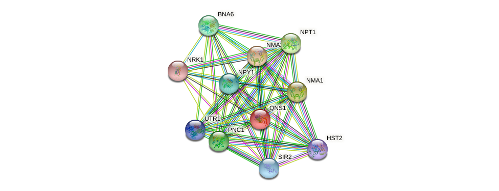 QNS1 protein (Saccharomyces cerevisiae) - STRING interaction network