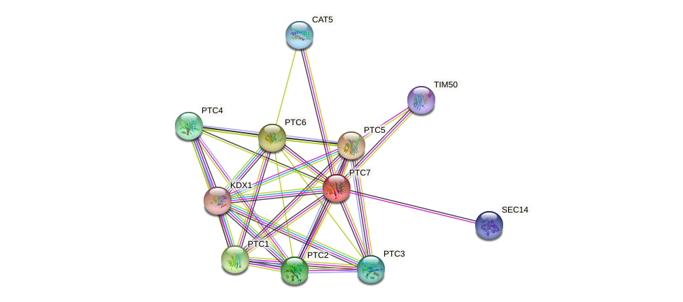 PTC7 protein (Saccharomyces cerevisiae) - STRING interaction network