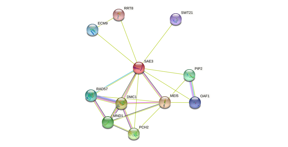 SAE3 protein (Saccharomyces cerevisiae) - STRING interaction network