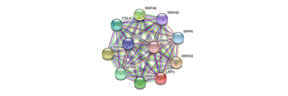 LRP1 protein (Saccharomyces cerevisiae) - STRING interaction network