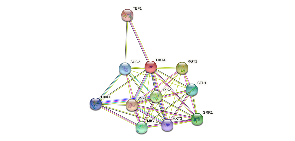 HXT4 protein (Saccharomyces cerevisiae) - STRING interaction network