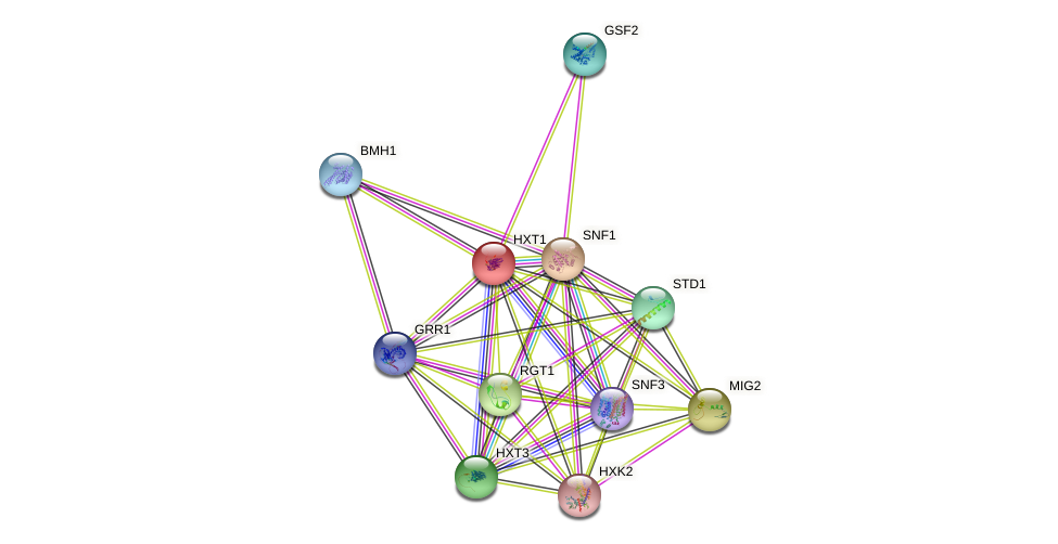 HXT1 protein (Saccharomyces cerevisiae) - STRING interaction network