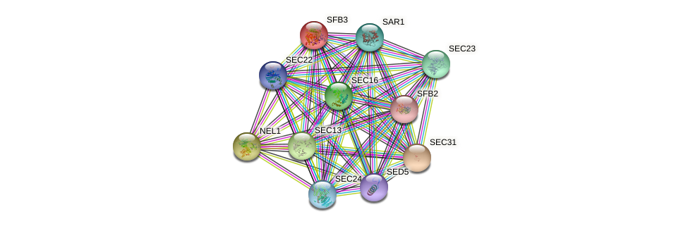 SFB3 protein (Saccharomyces cerevisiae) - STRING interaction network