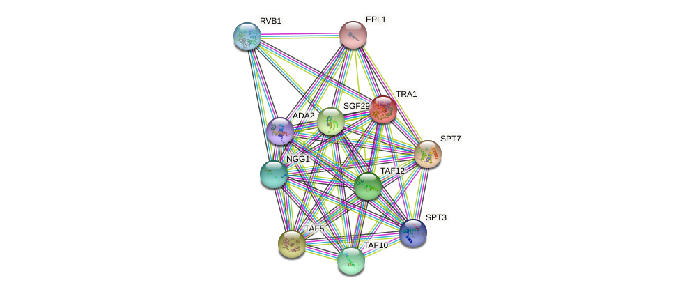 TRA1 protein (Saccharomyces cerevisiae) - STRING interaction network