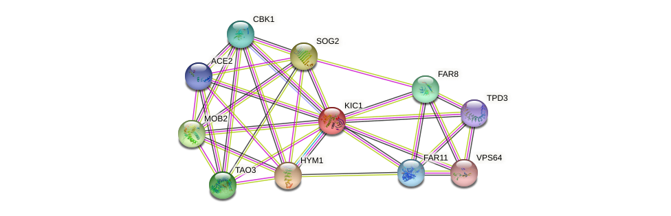 KIC1 protein (Saccharomyces cerevisiae) - STRING interaction network