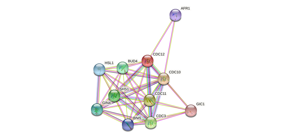 CDC12 protein (Saccharomyces cerevisiae) - STRING interaction network
