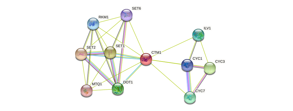 CTM1 protein (Saccharomyces cerevisiae) - STRING interaction network