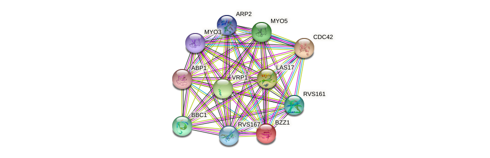 BZZ1 protein (Saccharomyces cerevisiae) - STRING interaction network