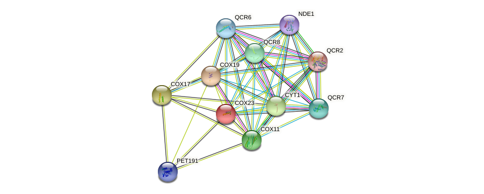 COX23 protein (Saccharomyces cerevisiae) - STRING interaction network