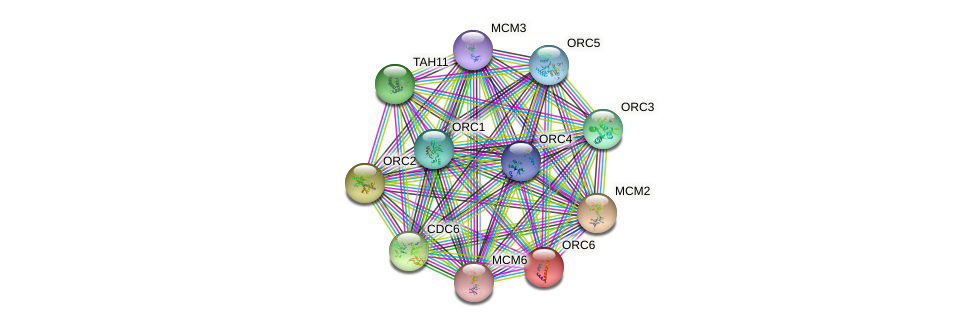ORC6 protein (Saccharomyces cerevisiae) - STRING interaction network