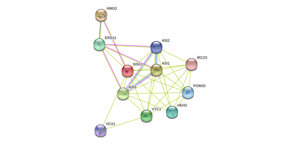 NSG1 protein (Saccharomyces cerevisiae) - STRING interaction network