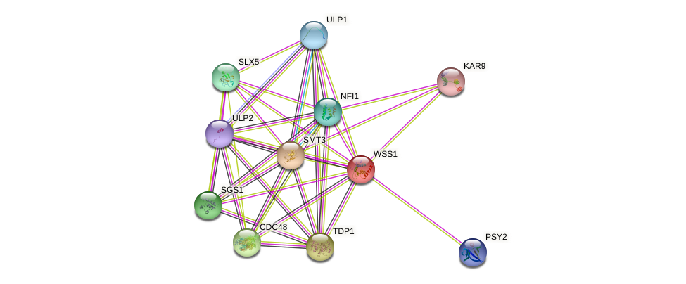 WSS1 protein (Saccharomyces cerevisiae) - STRING interaction network
