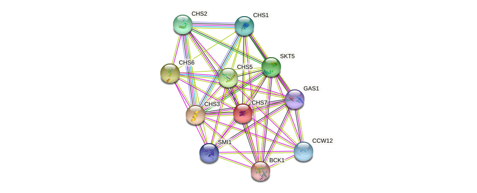CHS7 protein (Saccharomyces cerevisiae) - STRING interaction network