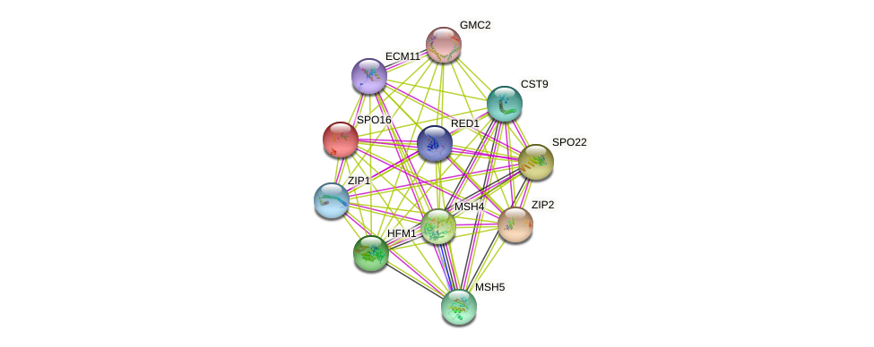 SPO16 protein (Saccharomyces cerevisiae) - STRING interaction network