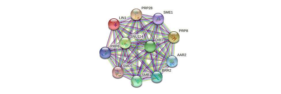 LIN1 protein (Saccharomyces cerevisiae) - STRING interaction network