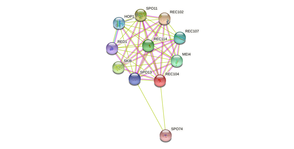 REC104 protein (Saccharomyces cerevisiae) - STRING interaction network