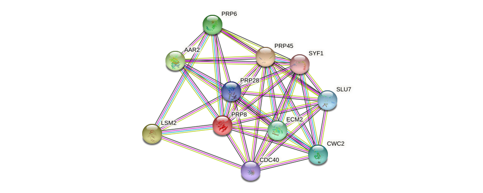 PRP8 protein (Saccharomyces cerevisiae) - STRING interaction network