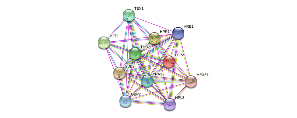 THP2 protein (Saccharomyces cerevisiae) - STRING interaction network