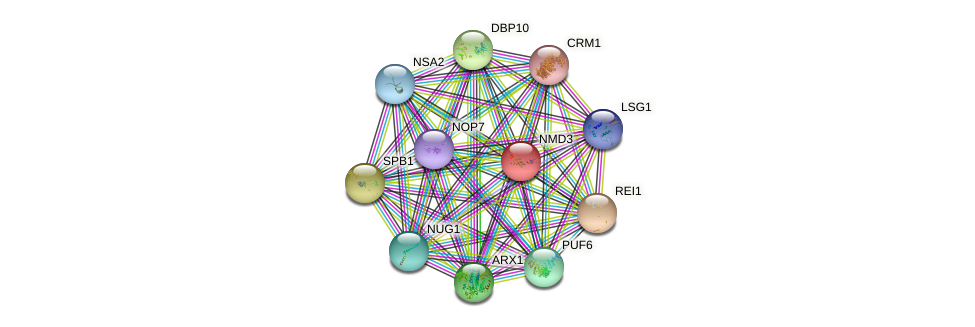 NMD3 protein (Saccharomyces cerevisiae) - STRING interaction network