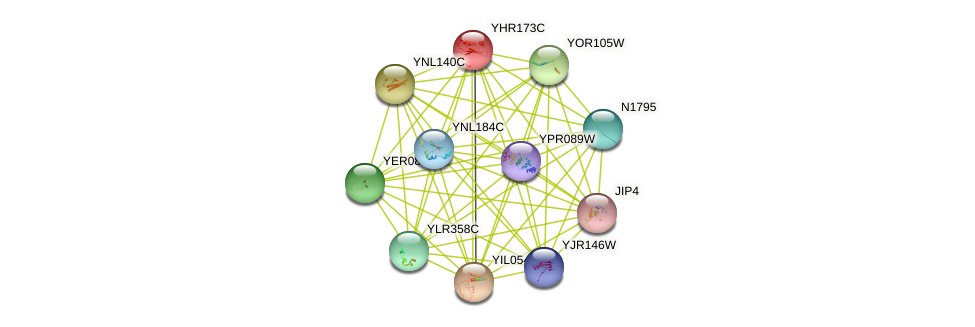 YHR173C protein (Saccharomyces cerevisiae) - STRING interaction network
