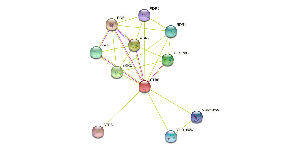 STB5 protein (Saccharomyces cerevisiae) - STRING interaction network