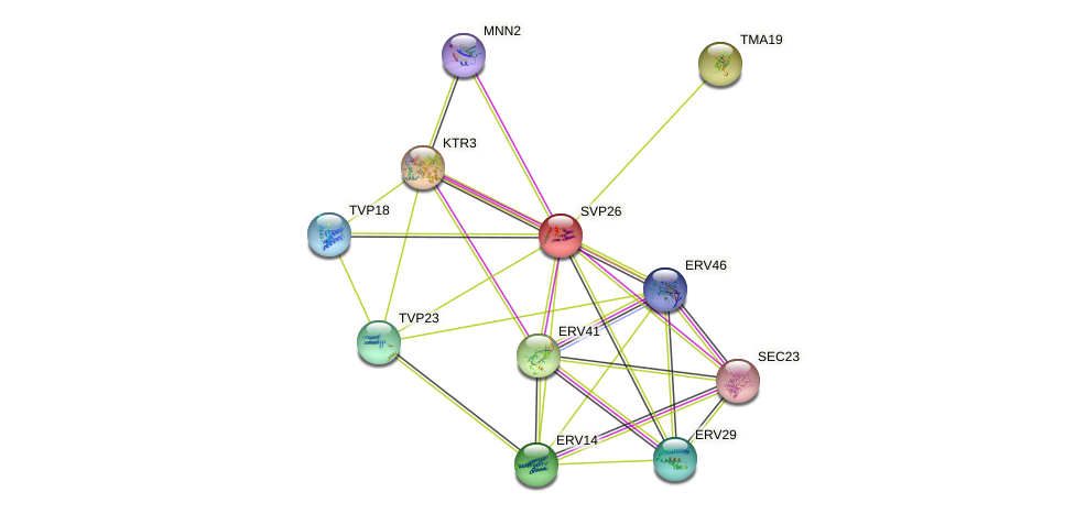 SVP26 protein (Saccharomyces cerevisiae) - STRING interaction network