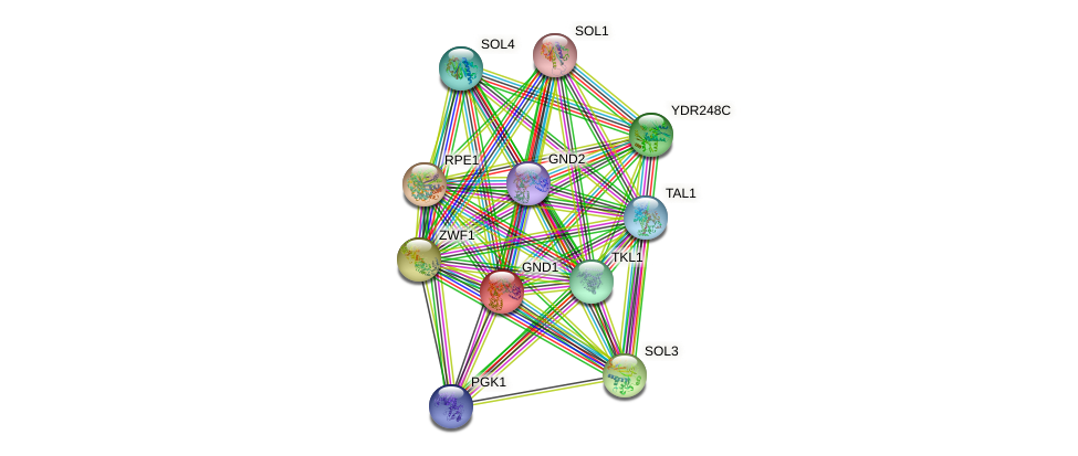 GND1 protein (Saccharomyces cerevisiae) - STRING interaction network