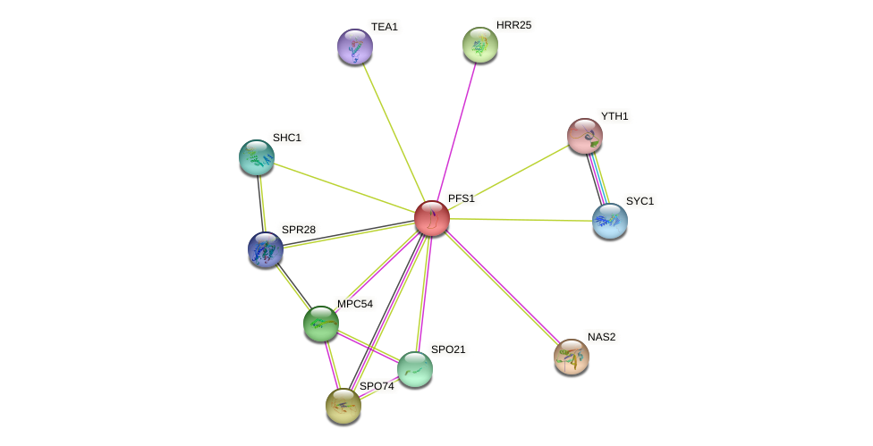 PFS1 protein (Saccharomyces cerevisiae) - STRING interaction network
