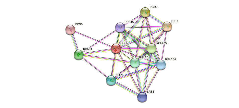 EGD2 protein (Saccharomyces cerevisiae) - STRING interaction network