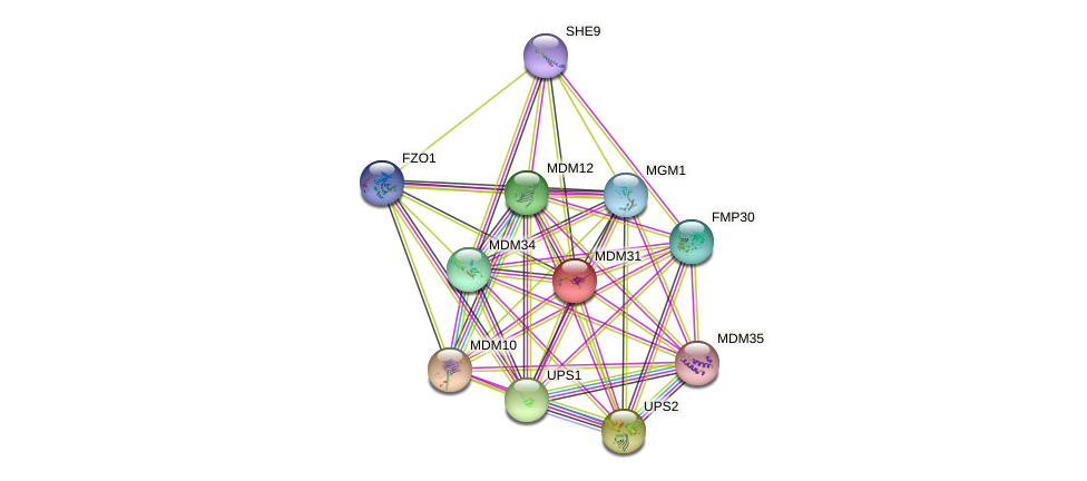 MDM31 protein (Saccharomyces cerevisiae) - STRING interaction network