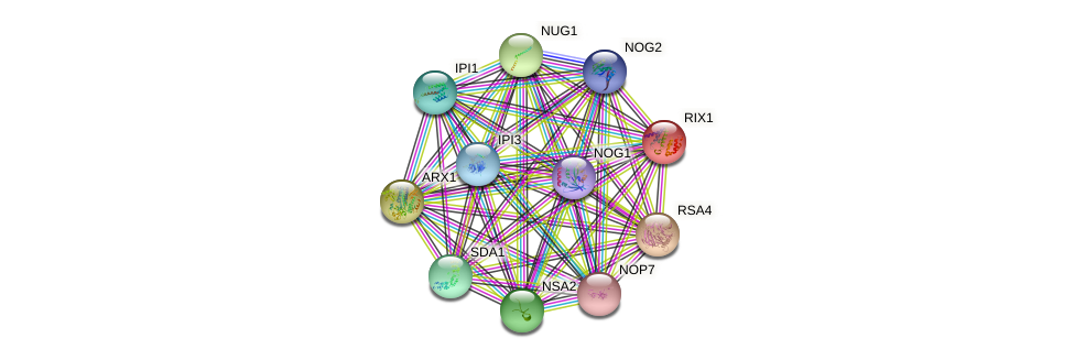 RIX1 protein (Saccharomyces cerevisiae) - STRING interaction network