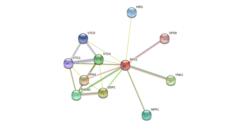 PPX1 protein (Saccharomyces cerevisiae) - STRING interaction network
