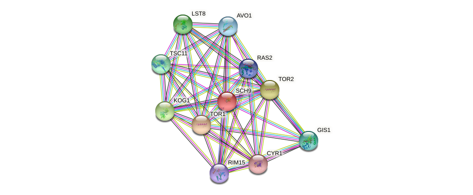 SCH9 protein (Saccharomyces cerevisiae) - STRING interaction network