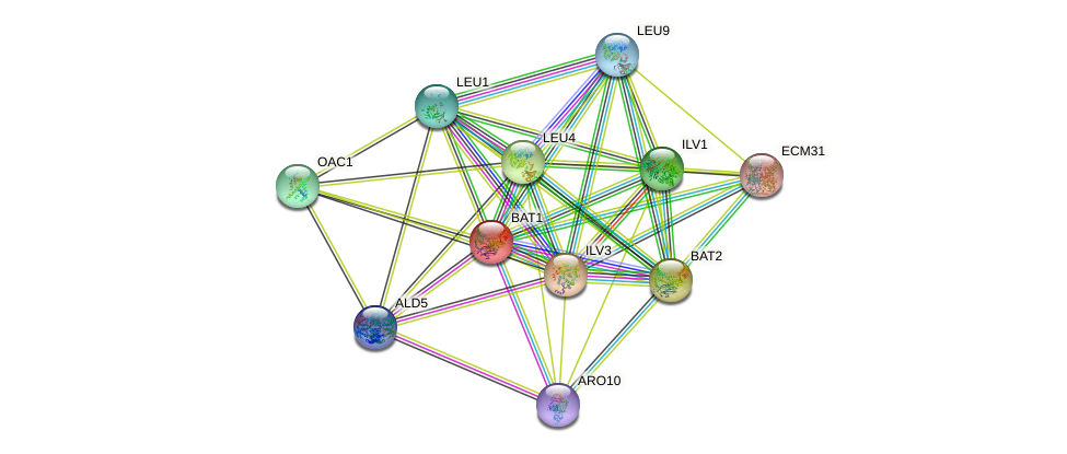 BAT1 protein (Saccharomyces cerevisiae) - STRING interaction network