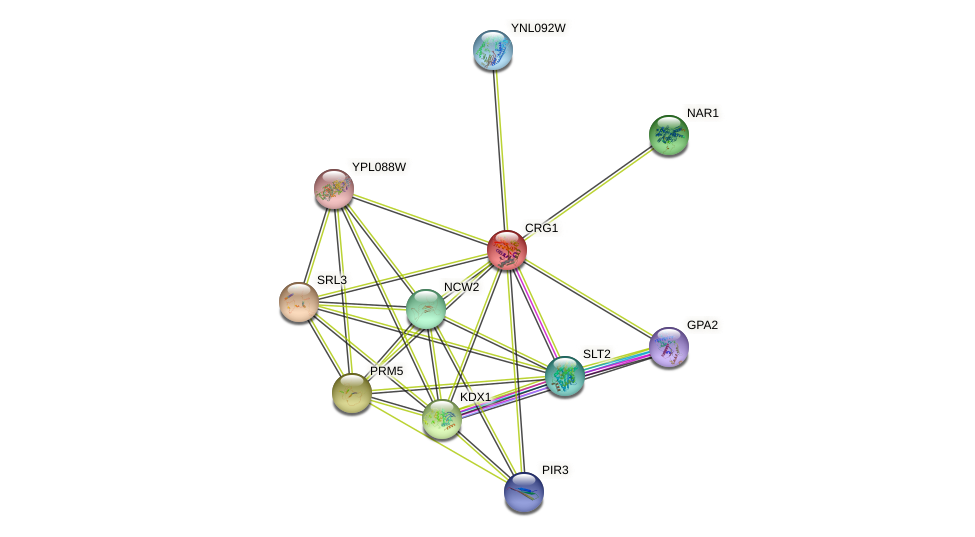 CRG1 protein (Saccharomyces cerevisiae) - STRING interaction network