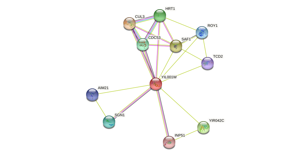 YIL001W protein (Saccharomyces cerevisiae) - STRING interaction network