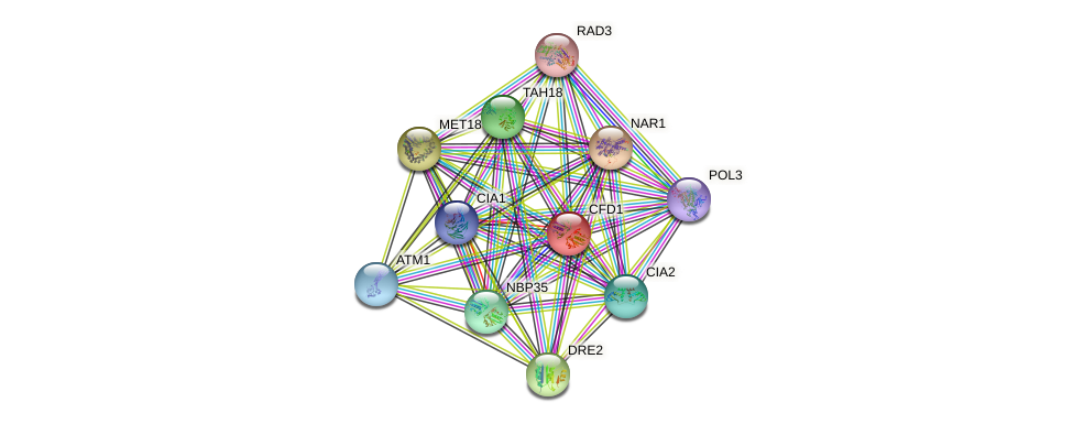 CFD1 protein (Saccharomyces cerevisiae) - STRING interaction network