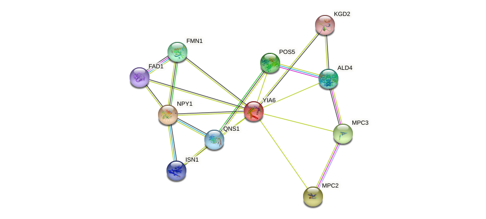 YIA6 protein (Saccharomyces cerevisiae) - STRING interaction network