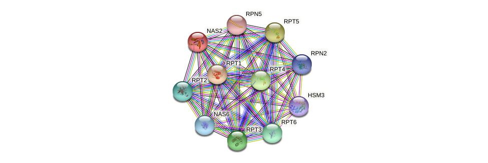 NAS2 protein (Saccharomyces cerevisiae) - STRING interaction network