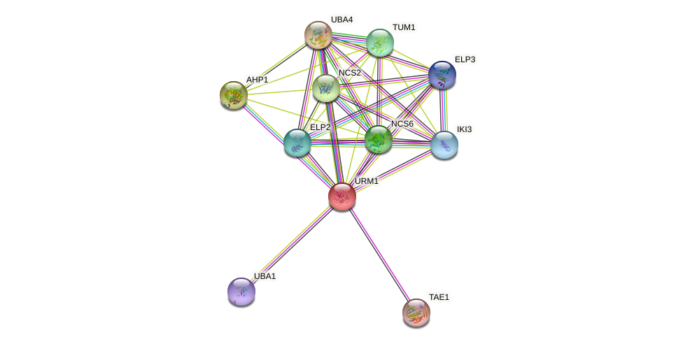 URM1 protein (Saccharomyces cerevisiae) - STRING interaction network