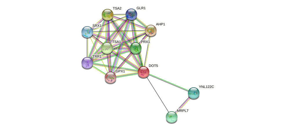 DOT5 protein (Saccharomyces cerevisiae) - STRING interaction network