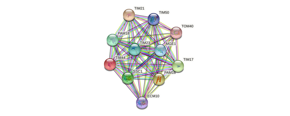 TIM44 protein (Saccharomyces cerevisiae) - STRING interaction network